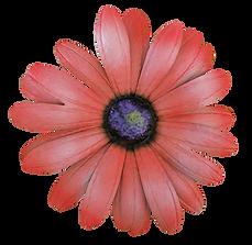 pink-flower_crop_smlr.png