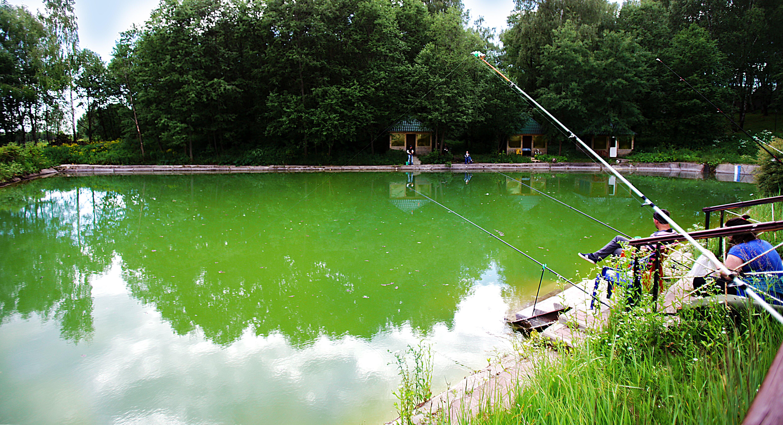 Рыбный пруд