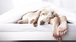 Is Bad Sleep Ruining Your Life?