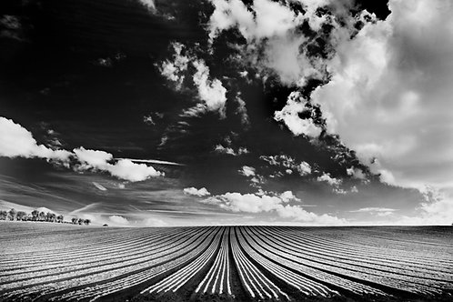 Infrared Furrows
