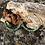 Thumbnail: Créoles Tanah Turquoise africaine