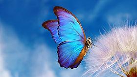Natural pastel background. Morpho butterfly and dandelion. Seeds of a dandelion flower on