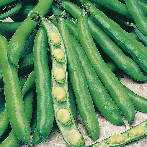 Broad Bean plants- Bunyards exhibition