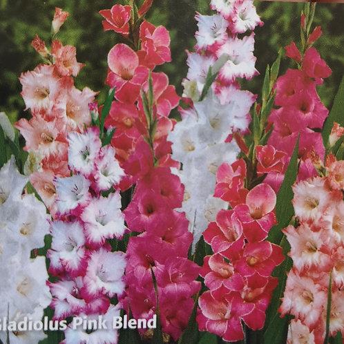Gladiolus Grandiflora Pink Blend