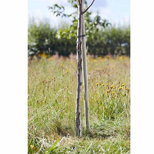 Round Tree Stake 1.2m x 35mm