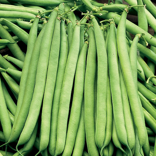 Dwarf french bean plants