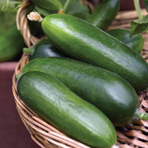 F1 Mini cucumber