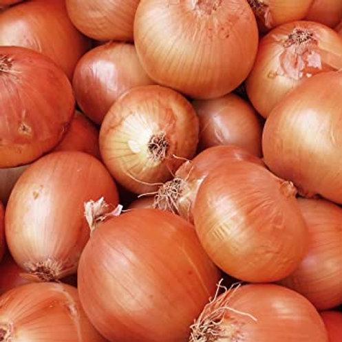 Turbo onion sets