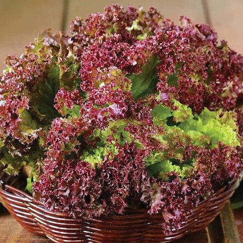 Lettuce- Lollo Rossa