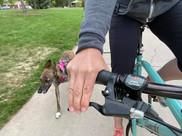 bikebeep.jpg
