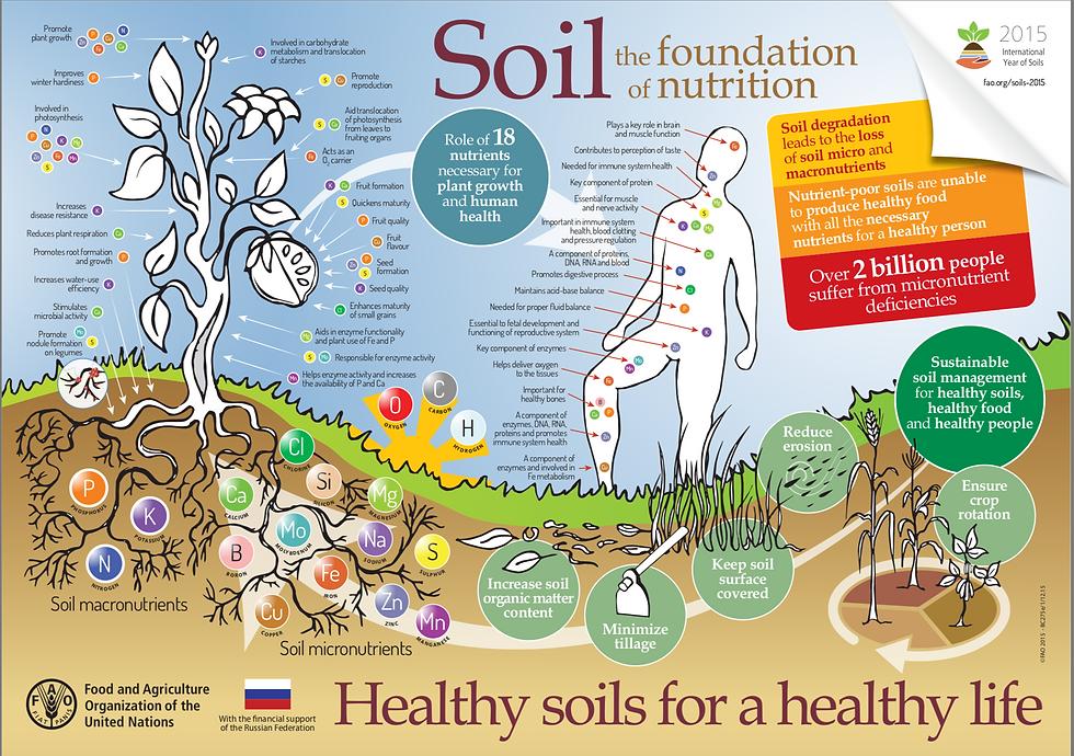 Soil_Nutrition-Foundation.png
