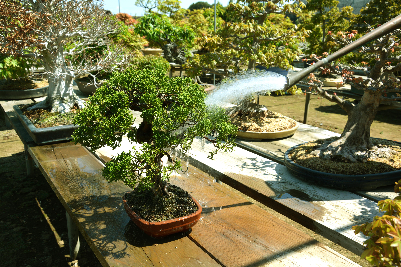数少ない盆栽の問屋です