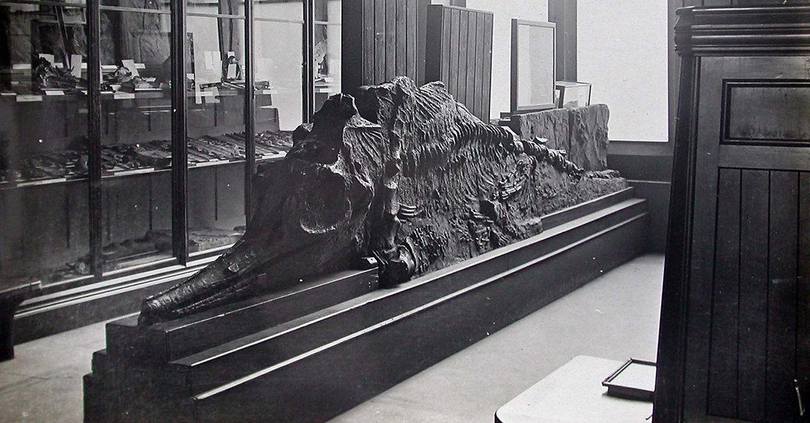 ichtiosaurus.jpg