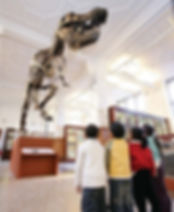 The Picture shows a group of 4 school-age children, excited in front of the fossil replica of the tyrannosaurus rex named Stan, in our fossil gallery. The photo introduces the home schooling section. Use the link below to navigate