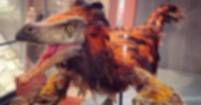 Image of a model of a velociraptor currently on display in our Fossil gallery.