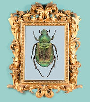 Beatle in a golden frame on a light blue background.