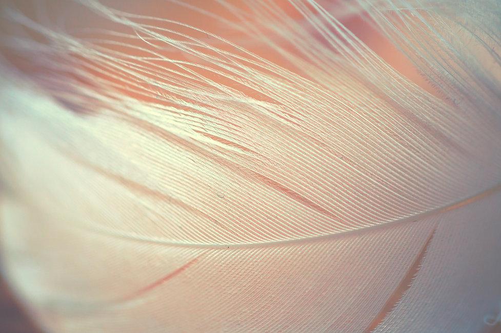 feather close up jpg.jpg