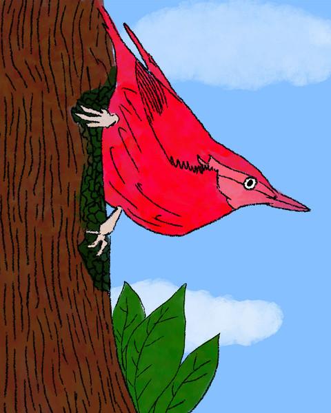 bird of paradise 5.jpg