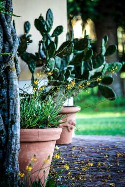Gallery Plants