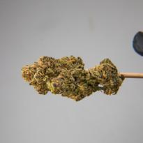 Cannabis 0323-19.jpg