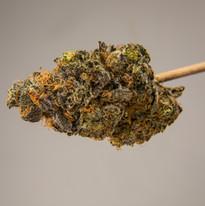 Cannabis 0323-23.jpg