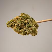 Cannabis 0323-26.jpg