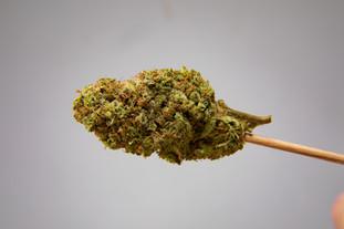 Cannabis 0323-1.jpg