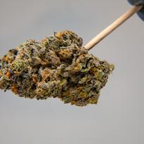 Cannabis 0323-11.jpg