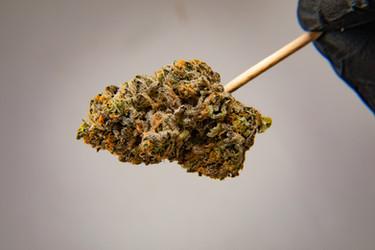 Cannabis 0323-10.jpg