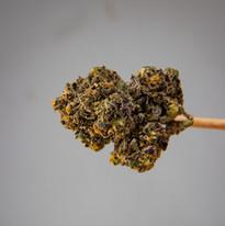 Cannabis 0323-15.jpg