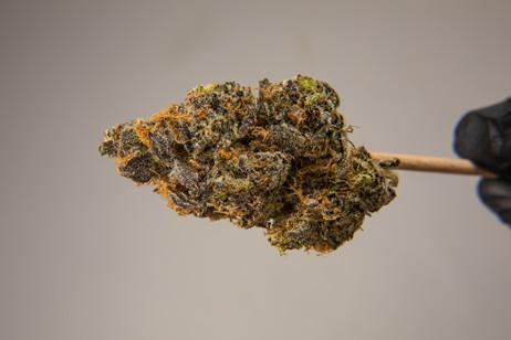 Cannabis 0323-22.jpg