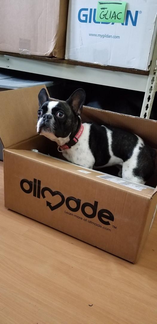 Gordie-in-the-Box