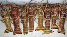 lobsters-day-2.jpg