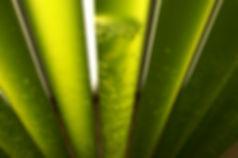 fotobioreattori per microalghe
