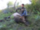 Del Smith with archery elk
