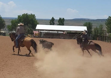 Team Roping at the home arena