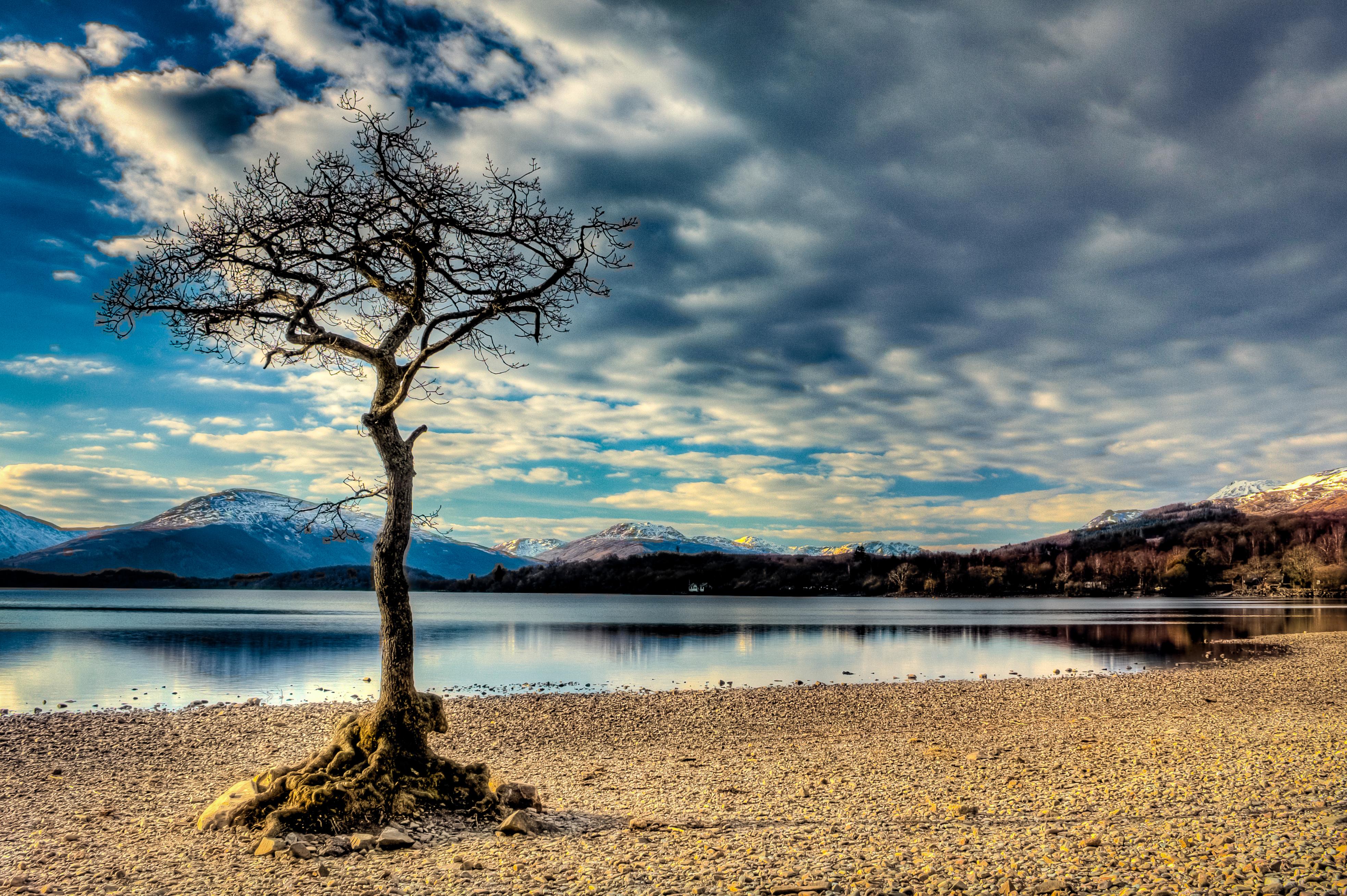 Loch Lomond tree  L7N