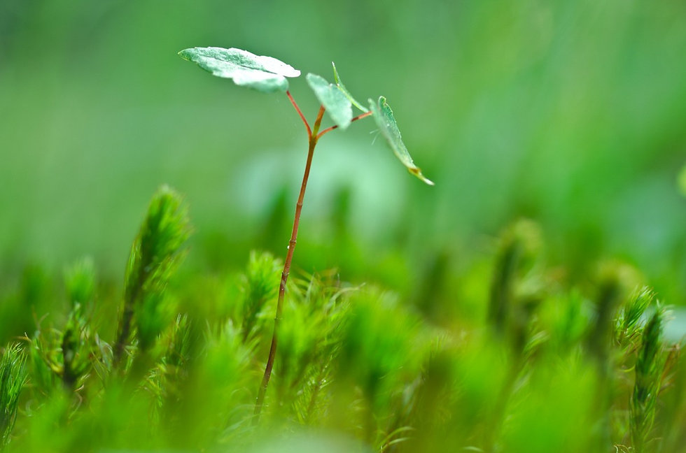 plant_leaf_seedling_sapling_sprout-11349