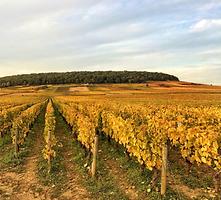 Séjours à vélo en Bourgogne Burgundy Bike tours