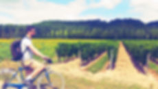 Tours guidés à vélo - Bike and wine tours - Burgundy Bike tours