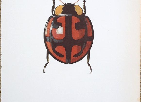 עמוד מתוך מדריך ישן נושן על חיפושיות #05
