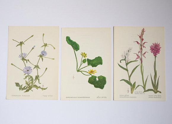 שלישיית פרחים 09