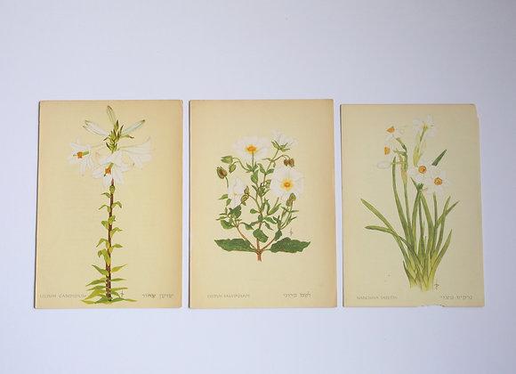 שלישיית פרחים 10