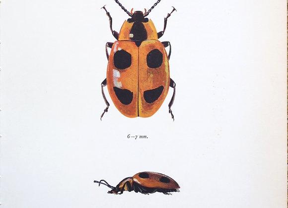 עמוד מתוך מדריך ישן נושן על חיפושיות #03