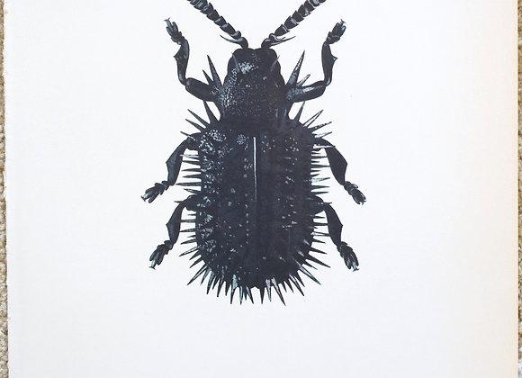 עמוד מתוך מדריך ישן נושן על חיפושיות #09