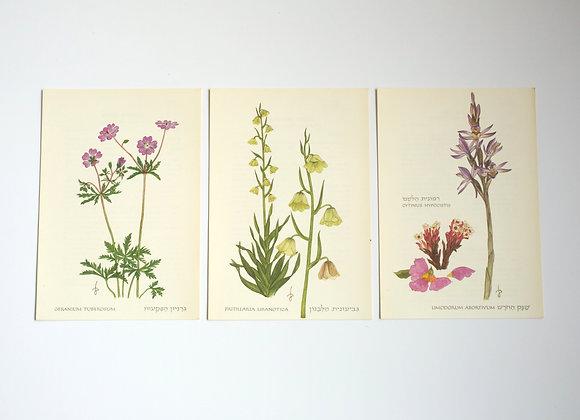 שלישיית פרחים 05