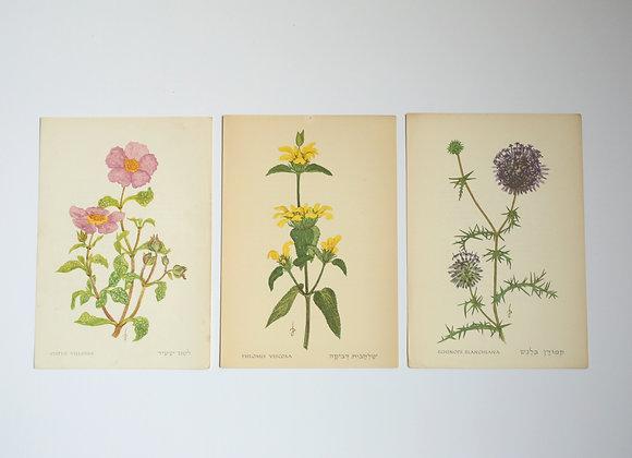 שלישיית פרחים 04