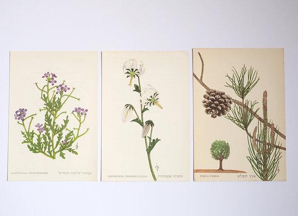 שלישיית פרחים 12