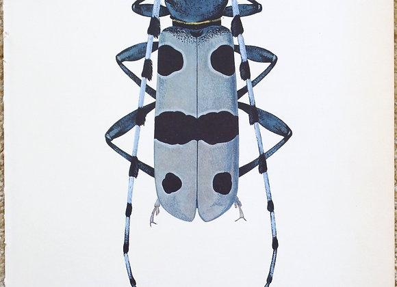 עמוד מתוך מדריך ישן נושן על חיפושיות #08