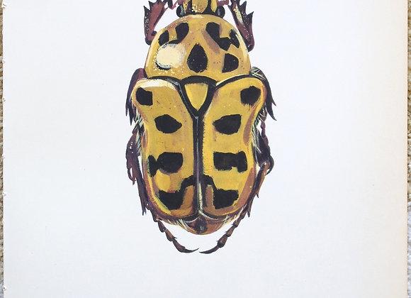 עמוד מתוך מדריך ישן נושן על חיפושיות #06